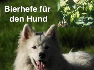 Bierhefe für den Hund