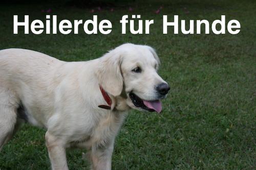 Oftmals hilft Heilerde für Hunde
