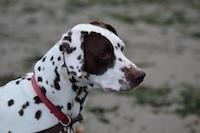 Hund mit roter Leine