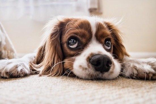 Hund traurig am Boden