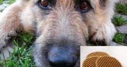 Hundekekse ohne Getreide