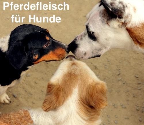 Pferdefleisch für Hunde
