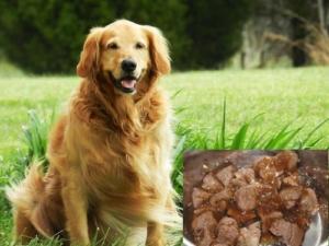 Hundefutter in Lebensmittelqualität