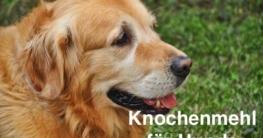 Knochenmehl für Hunde