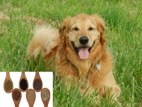 Schwarzkümmelöl Hund