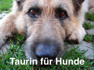 Taurin für Hunde