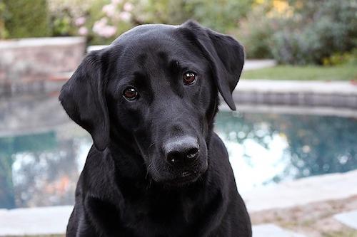 Bezaubernder Hund