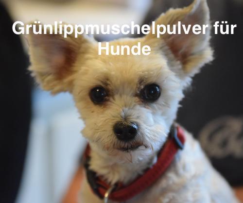 Gruenlippmuschelpulver für Hunde