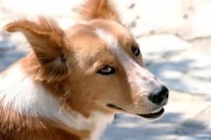 Wenn ein Hund Katzenkot frisst, kann das unterschiedliche Ursachen haben