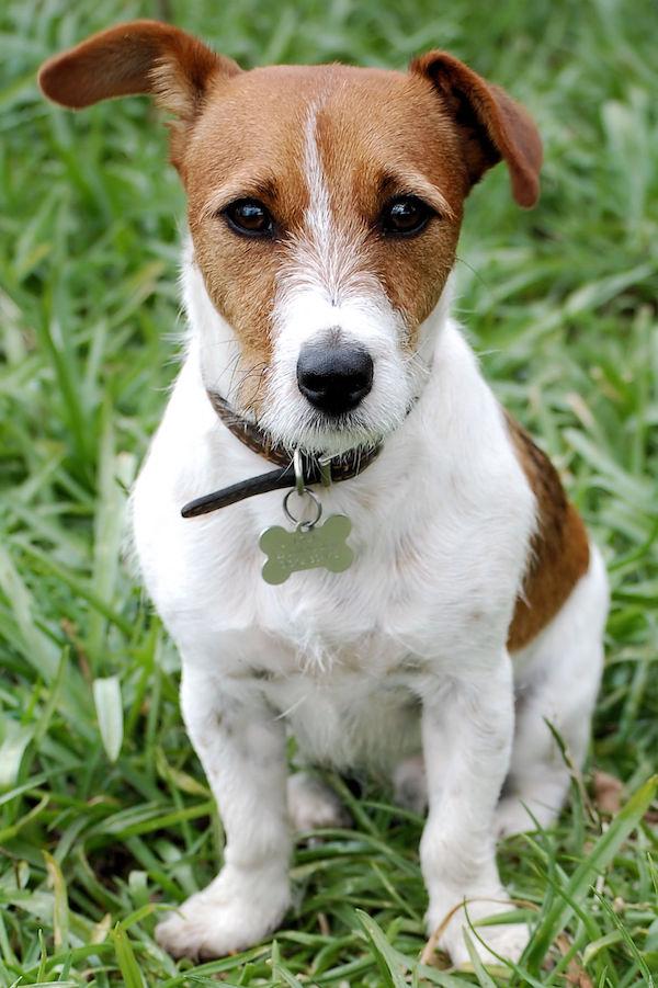 Hund-im-Gras