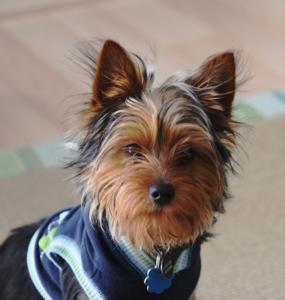 Hund mit Pullover