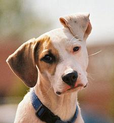Hund-auf-Rasen