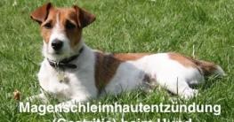 Magenschleimhautentzündung Gastritis Hund