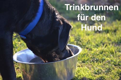 Trinkbrunnen für den Hund