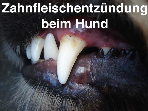 Zahnfleischentzündung Gingivitis Beim Hund Helfen Hausmittel