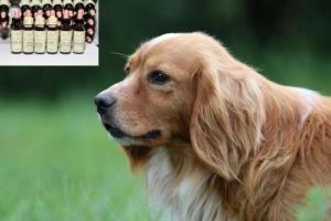 Rescue Tropfen für Hunde
