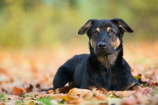Hund sitzt auf Blättern