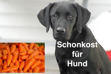 Schonkost für den Hund