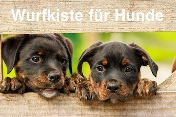 Wurfkiste für Hunde