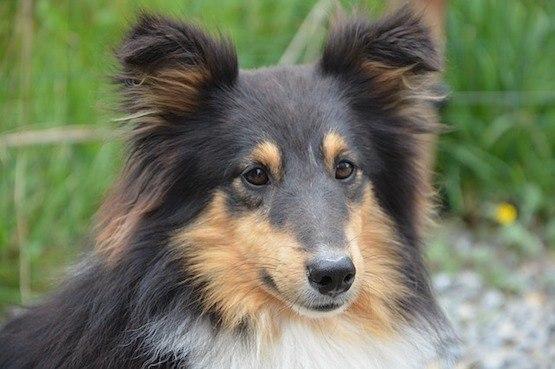 Ohrmilben Beim Hund Hilft Die Behandlung Mit Hausmitteln