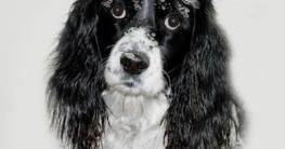 Hund mit Hundeshampoo