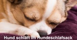 Hund schläft im Hundeschlafsack