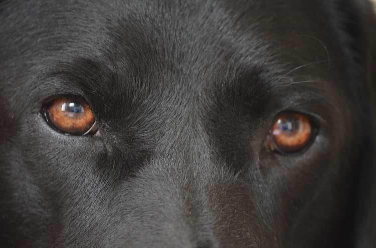 Hunde Augen