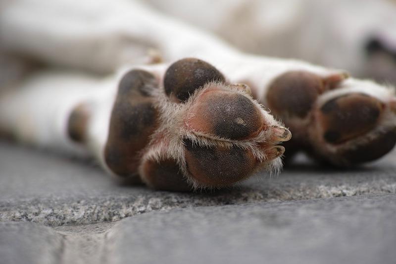 Hund mit Gelenkschmerzen