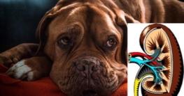 Hund mit Niereninsuffizienz