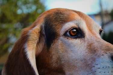 Hund im Portrait