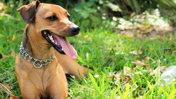 Hund sitzt im Gras