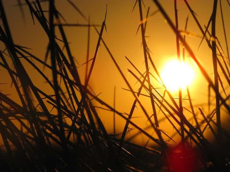 Sonne im Sommer