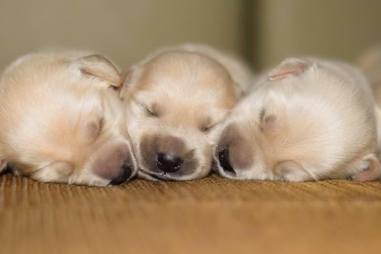 Welpen schlafen