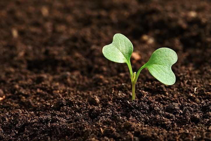 Erde mit Pflanze