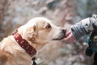 Hund in Natur