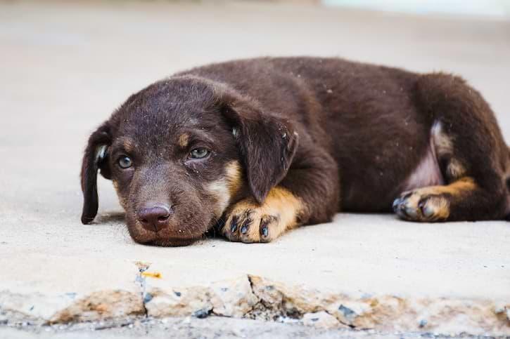 Hund auf Boden