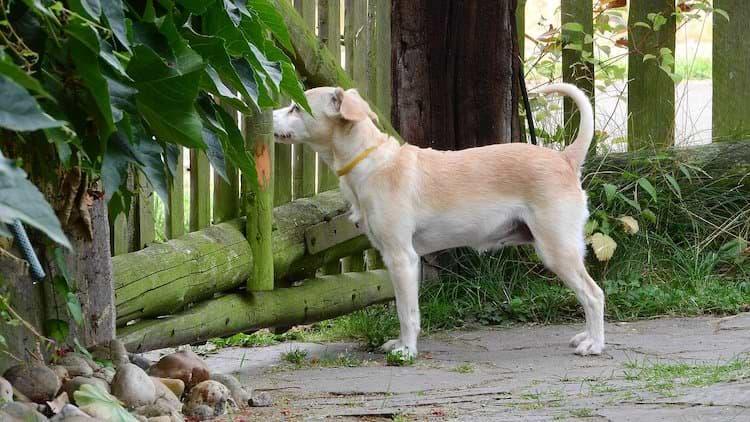 Hund vor Hundezaun