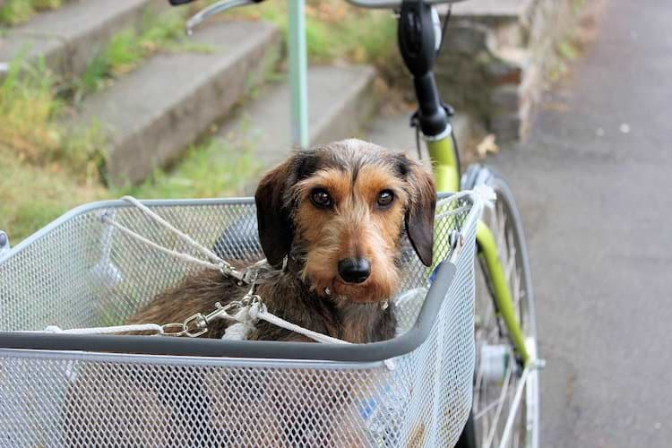 Hundefahrradkorb hinten