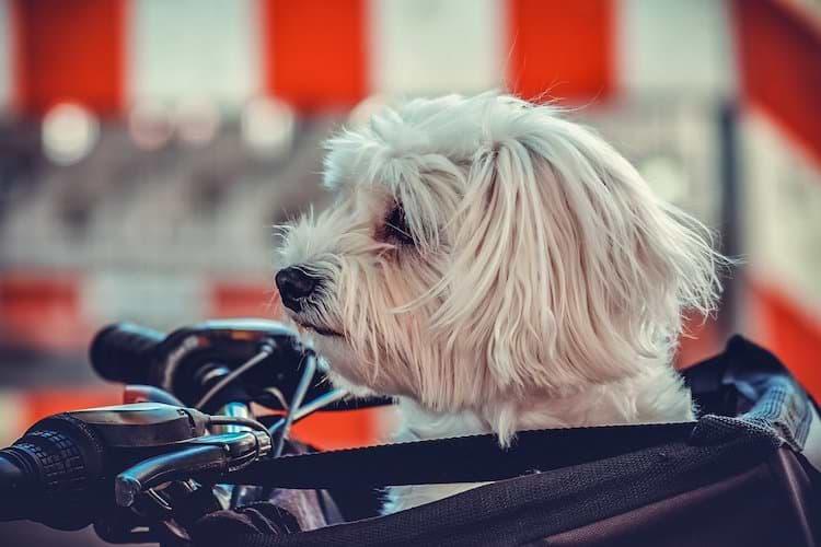 Hundefahrradkorb vorne